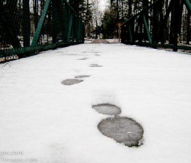 22-Foodprints in Snow